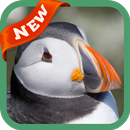 Puffin Wallpaper APK Android