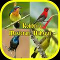 Cerecetan Kolibri Masteran Dahsyat Offline