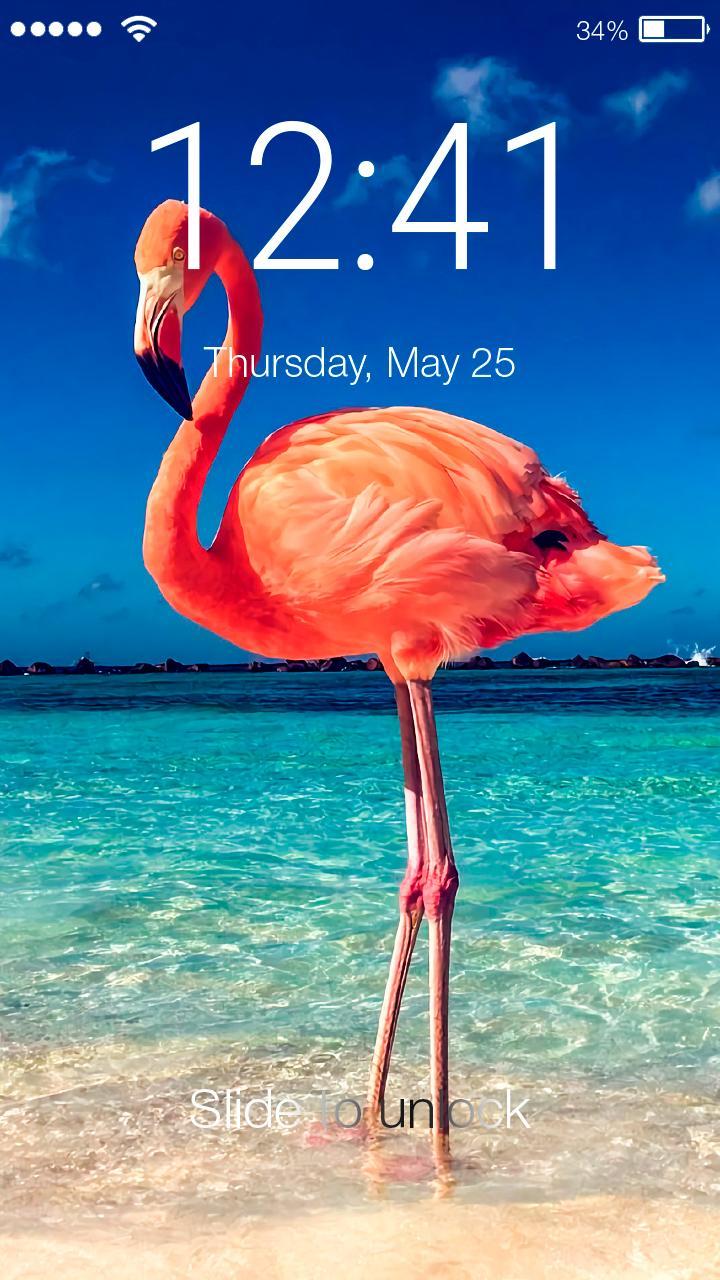 Flamingo Pink Tropic Wallpaper Hd Screen Lock For Android