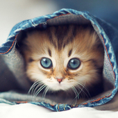 Puzzle Cute Cat icône