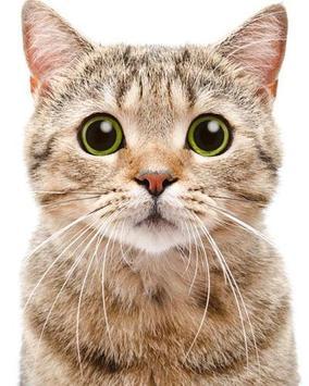 Puzzle Cute Cat Affiche