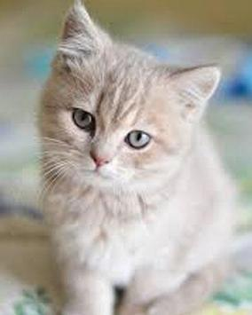 Puzzle Cute Cat capture d'écran 2