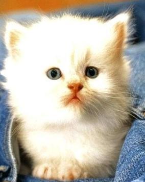 Puzzle Cute Cat capture d'écran 4