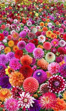 Beautiful flower 1 poster