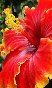 Beautiful flower 1 screenshot 2