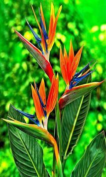 Beautiful flower 1 screenshot 4