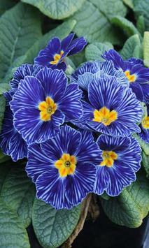 Blue flower screenshot 3