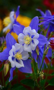 Blue flower screenshot 4