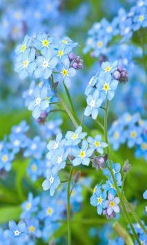 Blue flower screenshot 5