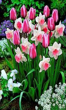 Daffodils screenshot 5