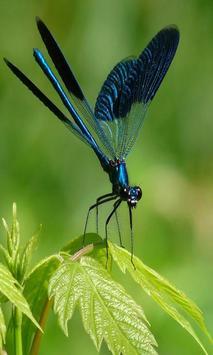 Dragonfly screenshot 2