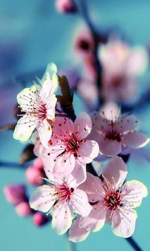 Sakura screenshot 5