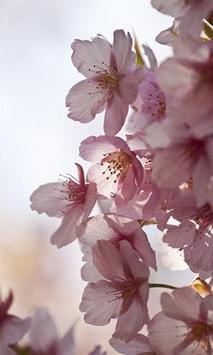 Sakura screenshot 2