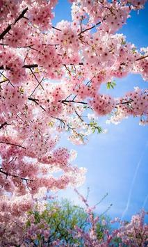 Sakura screenshot 3