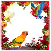 Love Bird Insta DP icon