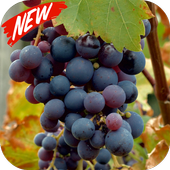 Grapes wallpaper icon