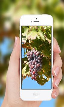 Grapes wallpaper screenshot 5