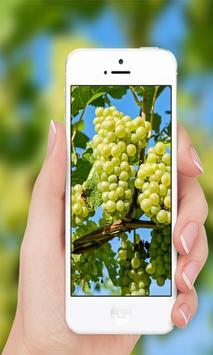 Grapes wallpaper screenshot 2
