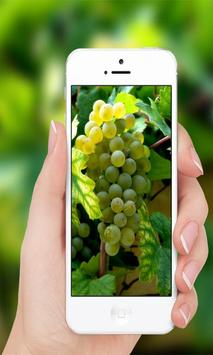 Grapes wallpaper screenshot 3