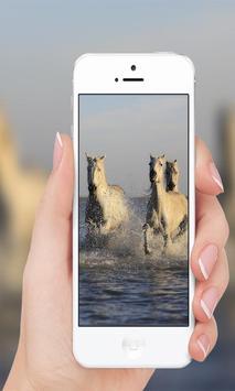 Horses wallpaper screenshot 4