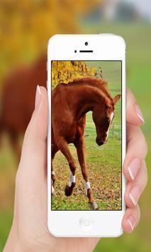 Horses wallpaper screenshot 5