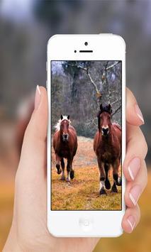 Horses wallpaper poster