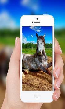 Horses wallpaper screenshot 2