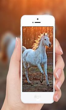 Horses wallpaper screenshot 3