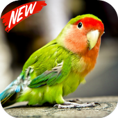 Parrots wallpaper icon