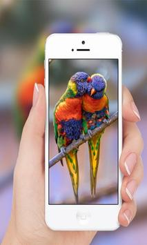 Parrots wallpaper screenshot 1