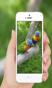 Parrots wallpaper screenshot 3
