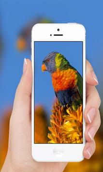 Parrots wallpaper screenshot 4