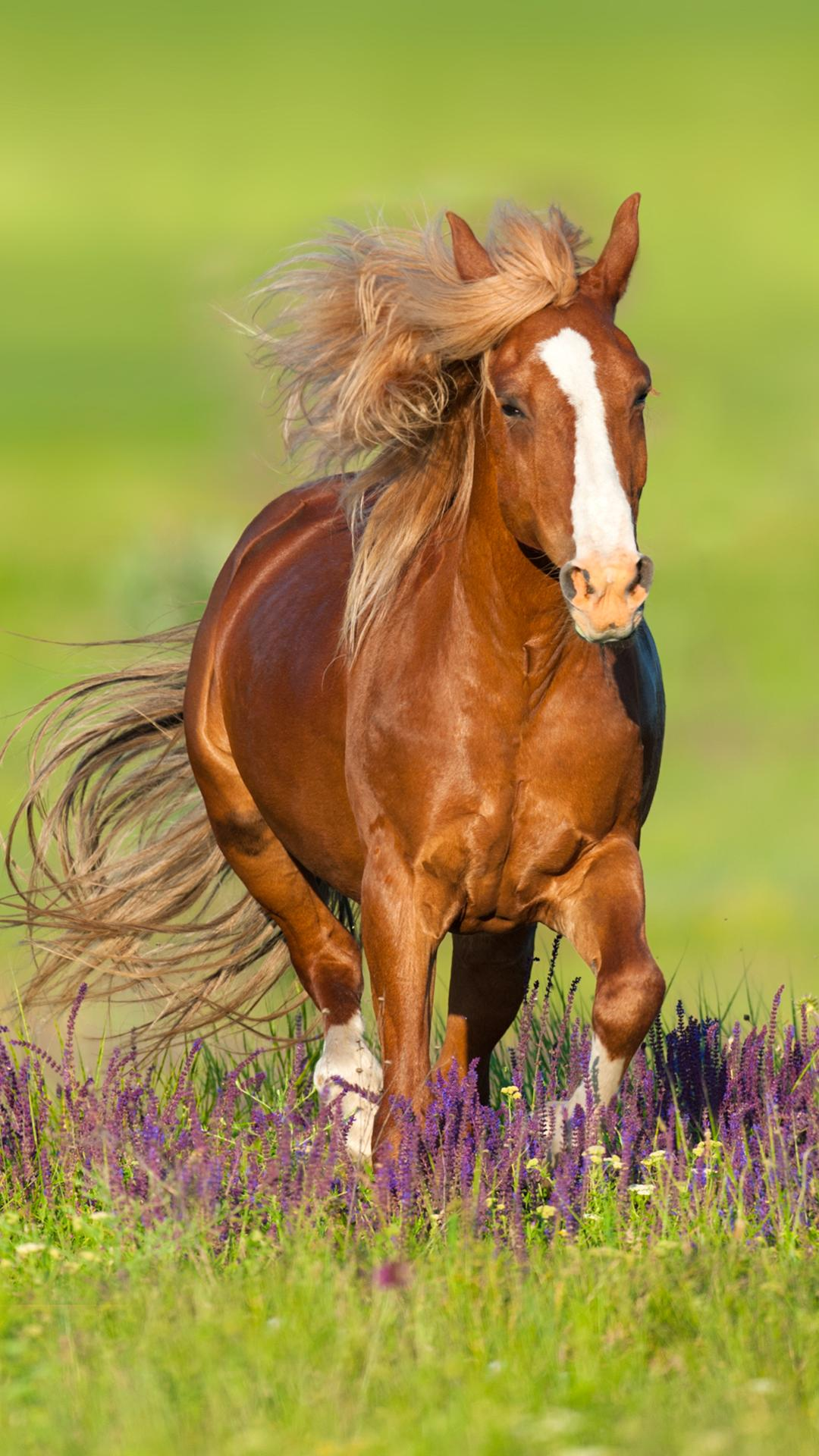 Horse Wallpapers For Android Apk Download