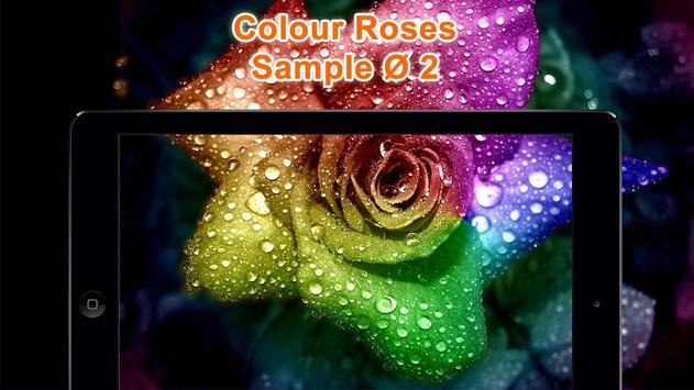Colorful Roses Wallpapers HD screenshot 8
