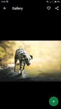 Dalmatian Wallpapers HD screenshot 2