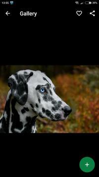 Dalmatian Wallpapers HD screenshot 3