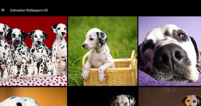 Dalmatian Wallpapers HD screenshot 6