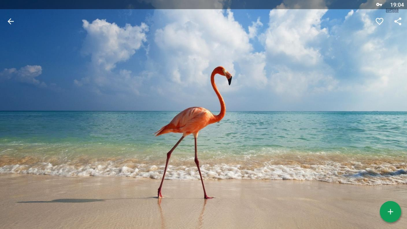 Flamingo Wallpapers Hd For Android Apk Download