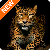 Leopard Wallpapers HD icon