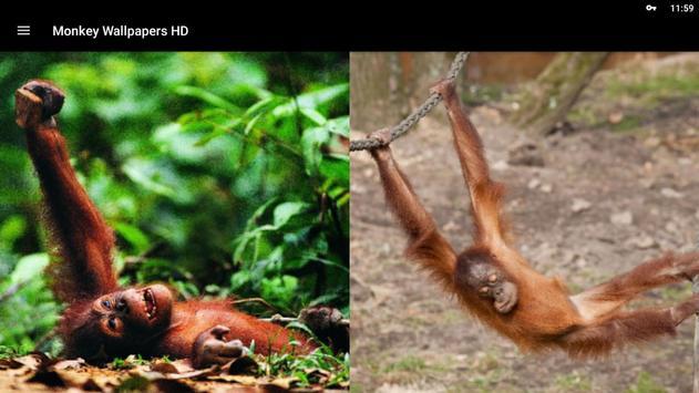 Monkey Wallpapers HD screenshot 10
