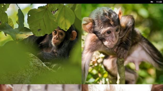 Monkey Wallpapers HD screenshot 6