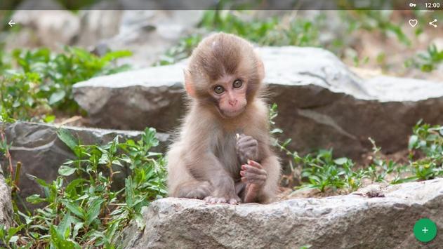Monkey Wallpapers HD screenshot 8