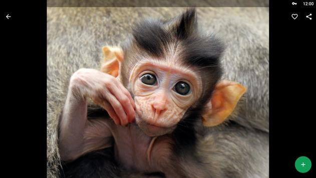 Monkey Wallpapers HD screenshot 9