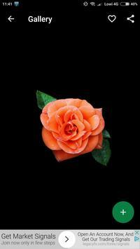 Orange Roses Wallpapers HD screenshot 3