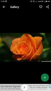 Orange Roses Wallpapers HD screenshot 1