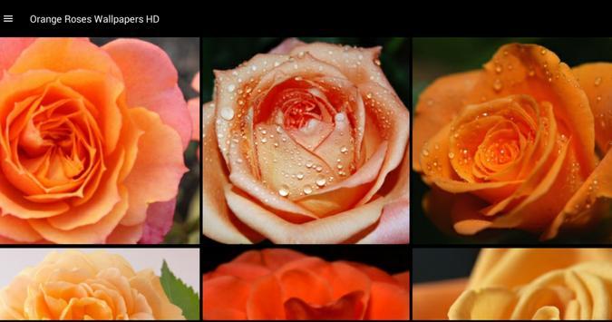Orange Roses Wallpapers HD screenshot 4