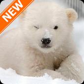 Polar Bear Wallpapers HD icon