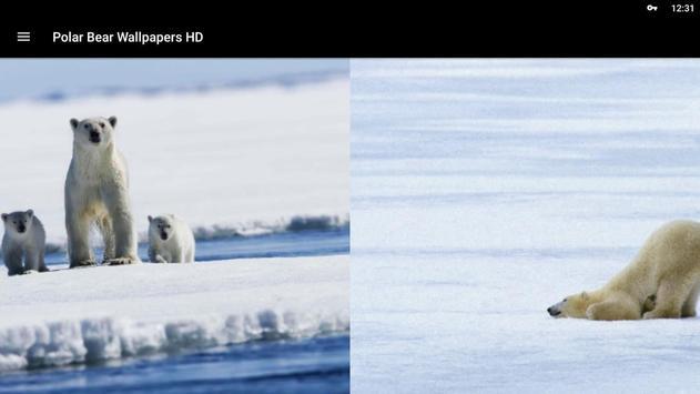Polar Bear Wallpapers HD screenshot 5