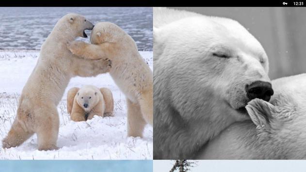 Polar Bear Wallpapers HD screenshot 6