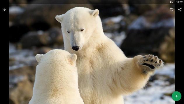 Polar Bear Wallpapers HD screenshot 8